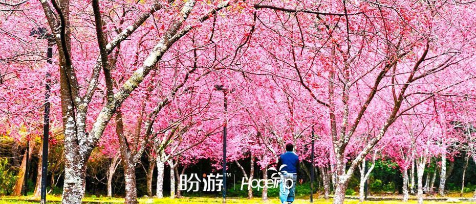 台灣南投奧萬大半日遊,台灣奧萬大旅遊團門票,奧萬大楓林區一日遊拼車,奧萬大生態池旅遊行程,奧萬大草原半日遊接送