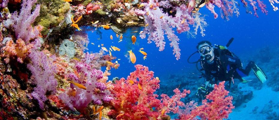 泰國芭堤雅格蘭島浮潛繽紛一日遊