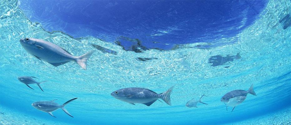 泰國芭堤雅格蘭島自由行