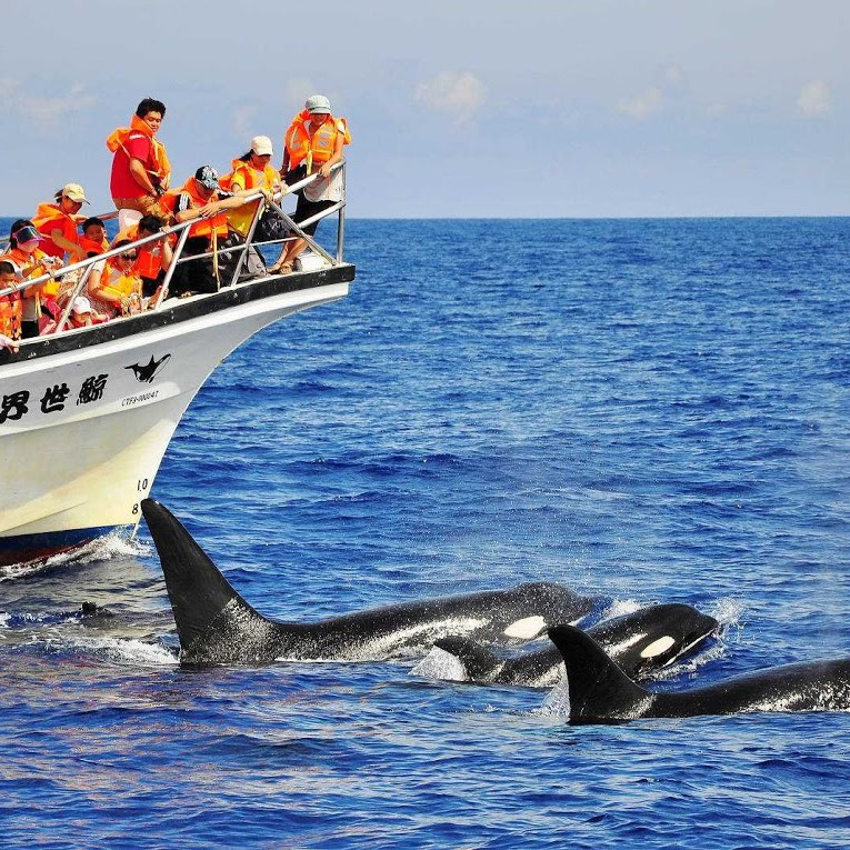 花蓮花東賞鯨體驗(含接送)