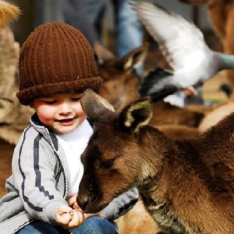 曼谷Safari野生動物園一日遊(門票+午餐+接送+英文導遊)
