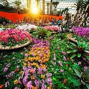 新加坡濱海灣花園雙館+金沙空中花園套票(掃碼入園)