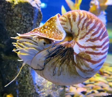 曼谷暹羅海洋世界超值套票+曼谷Artinparadise3D美術館門票套票,曼谷暹羅海洋世界門票,曼谷海洋水族館門票,曼谷3D館門票