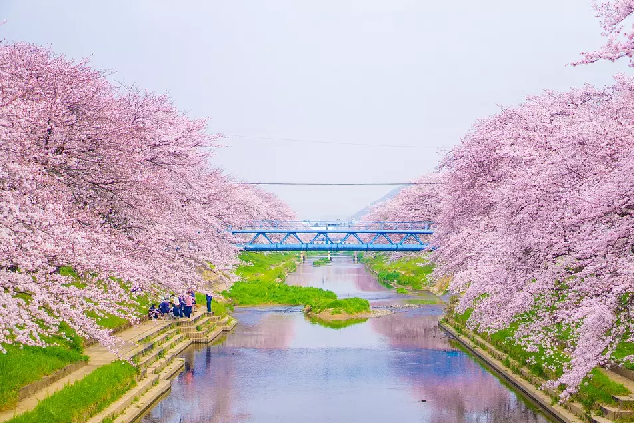 日本櫻花季節2020最佳賞櫻地推介