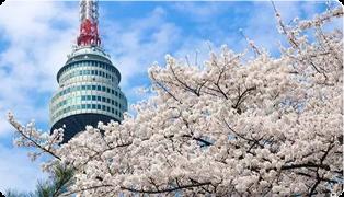 2018韓國哪裡櫻花最好看